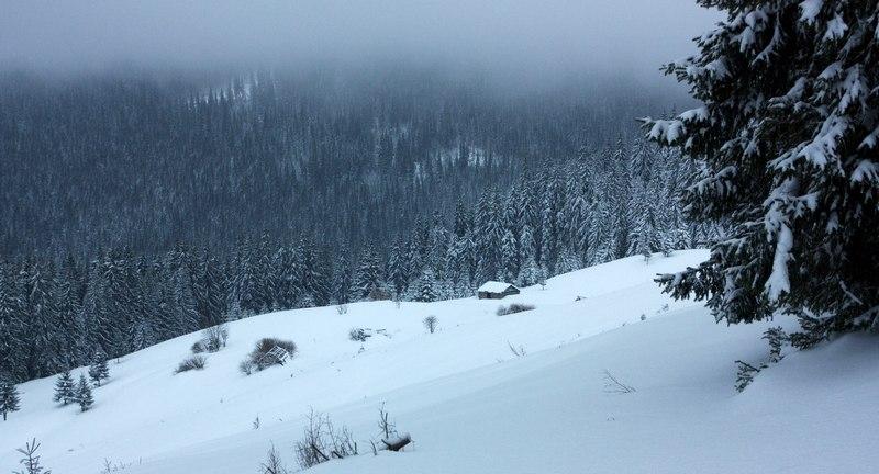 Зимовий карпатський ліс