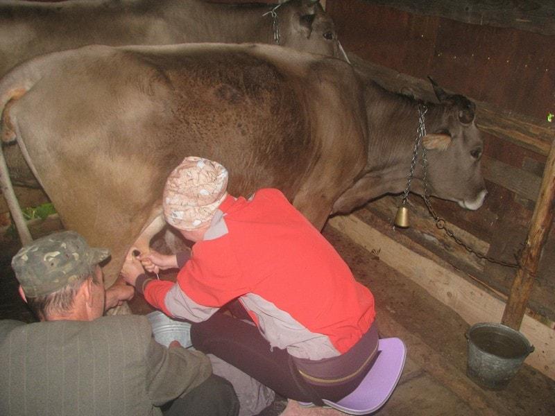 Парне молоко в Карпатах