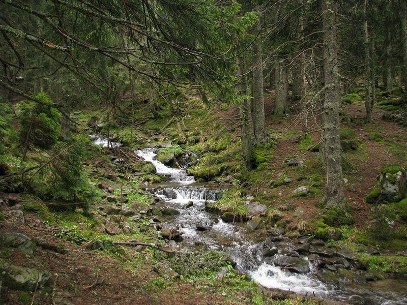Гірський струмок у Мармаросах